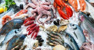 صادرات الصيد البحري