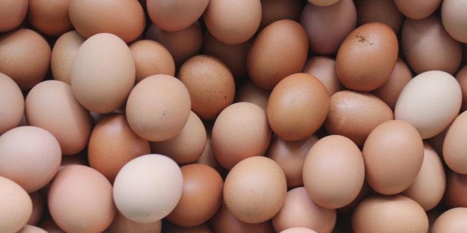 1804w-Eggs