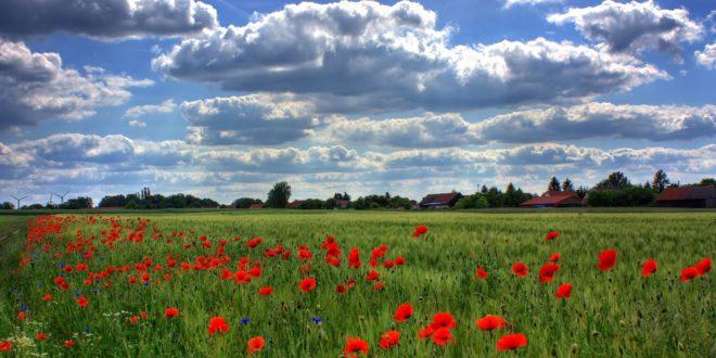 field-of-poppies-brandenburg-nature-royalty-free-86431